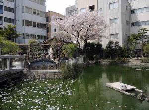 星合の池1ds