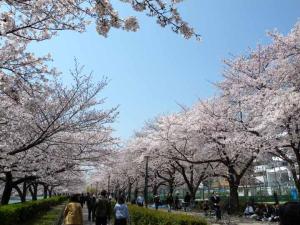 桜之宮公園1ds
