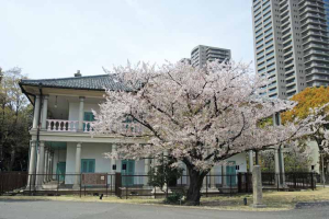 桜と泉布観1ds