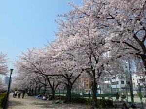 桜之宮公園3ds